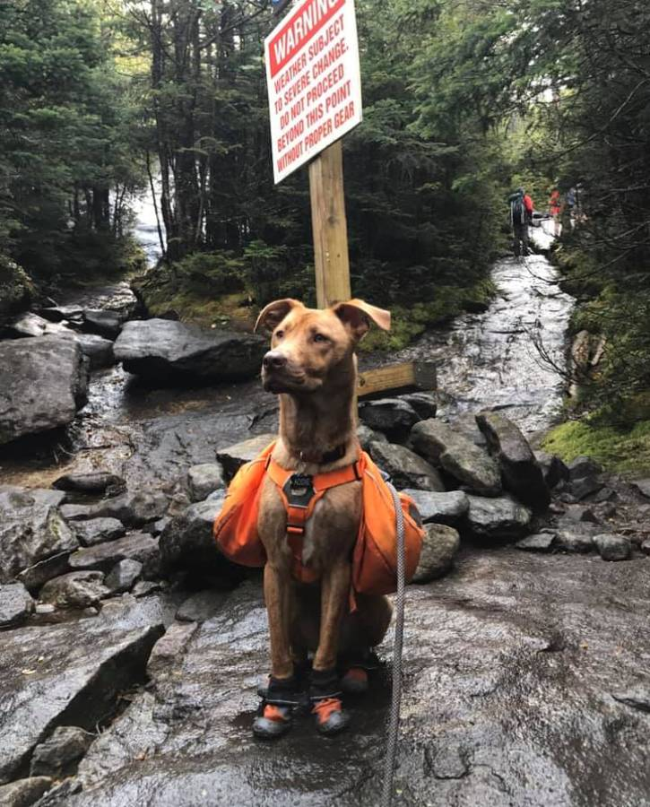 Dog wearing orange hiking gear and boots on trail