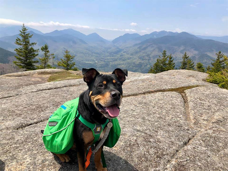 dog wearing backpack on mountain summit