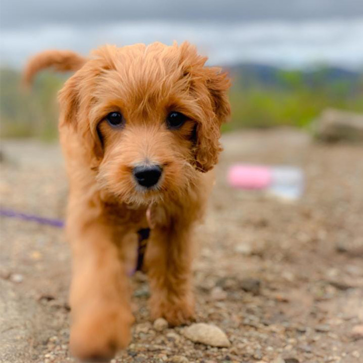 small dog on hadley mountain summit
