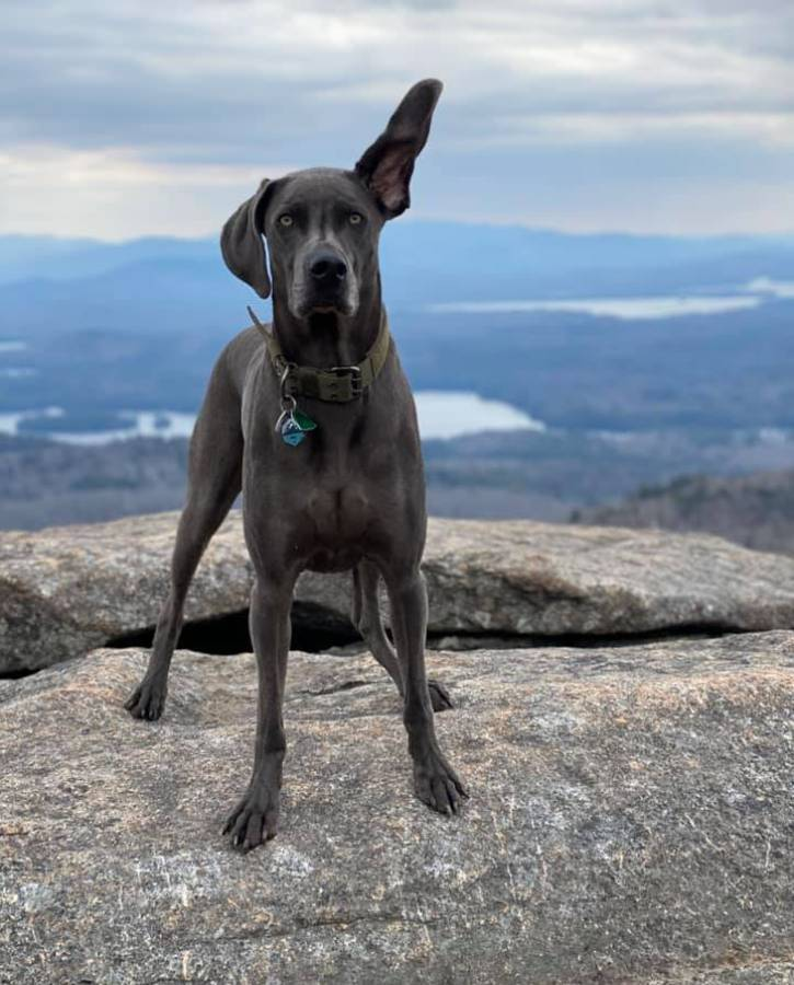Gray dog atop mountain with one ear standing up