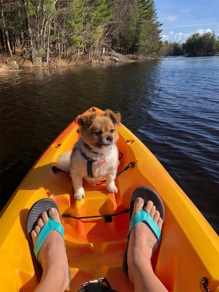 small dog in the front of a kayak