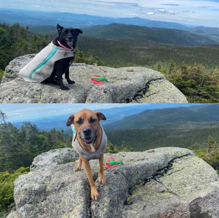Black dog and brown dog atop mountain