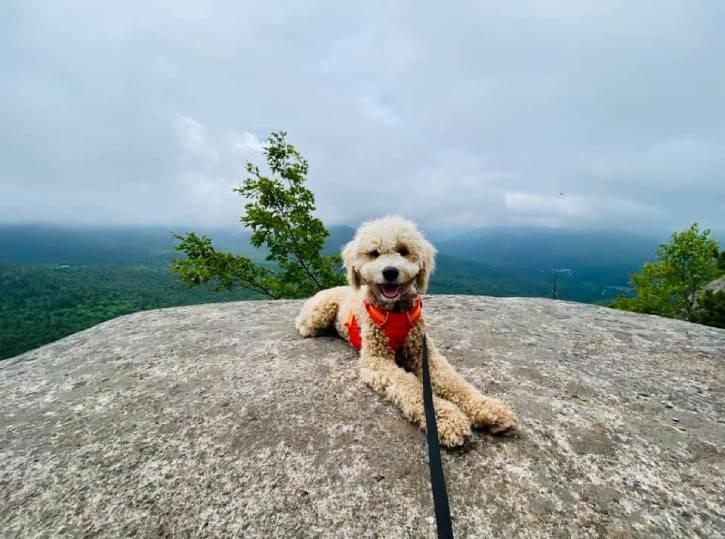 Small white dog atop mountain on a foggy day