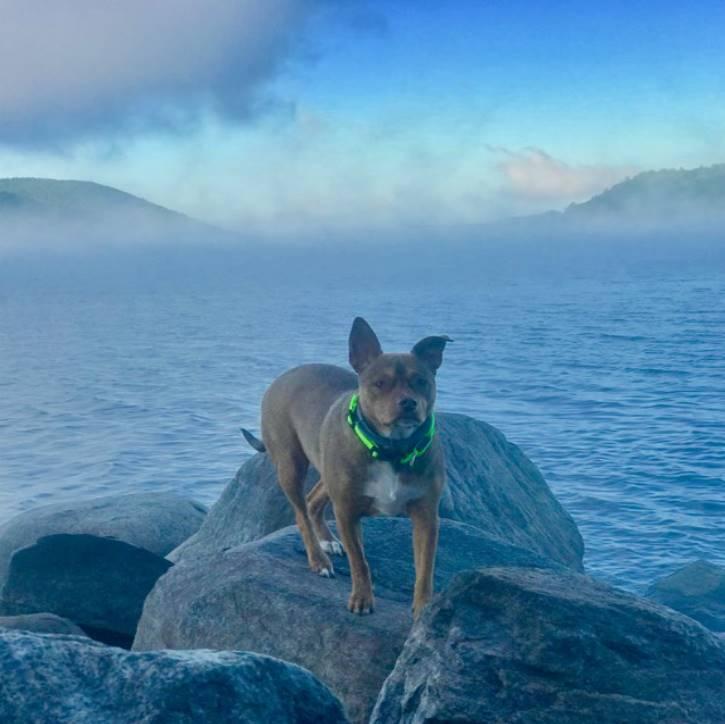 dog standing on rocks near lake