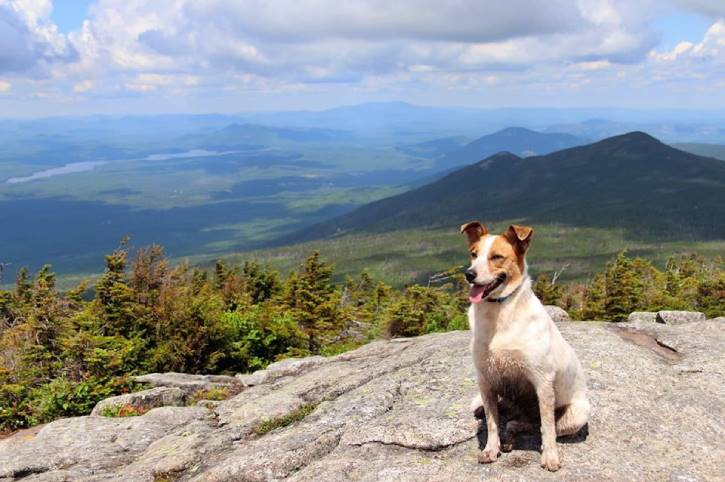 A dog on top of a mountain
