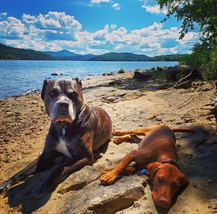Two dogs laying on the beach at the lake
