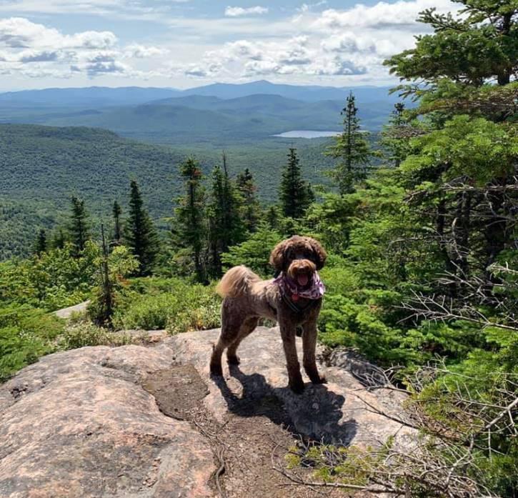 Medium brown dog atop mountain