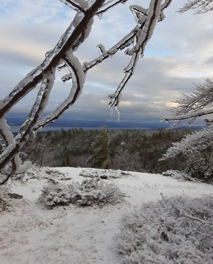 Close up of ice on tree branch atop snowy mountain