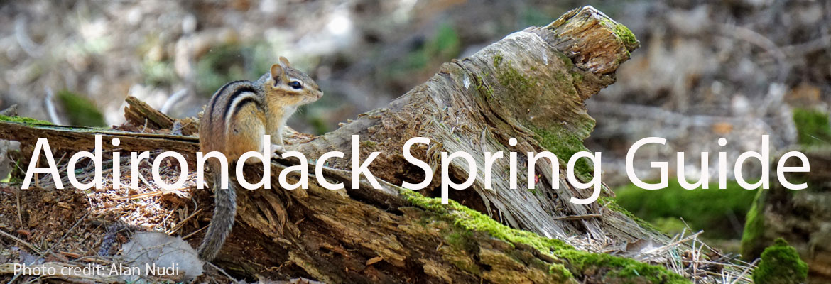 a squirrel on a log, text saying Adirondack Spring Guide