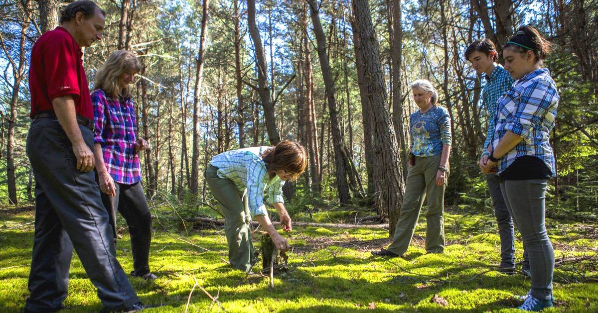 group of people forest bathing