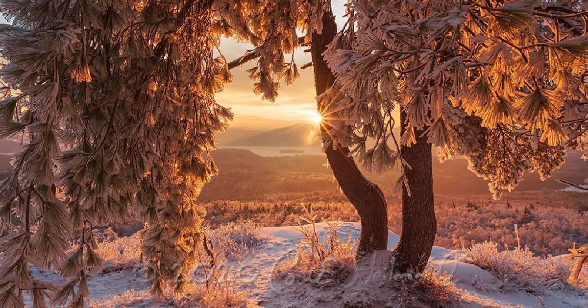 winter photo of tree on mountain