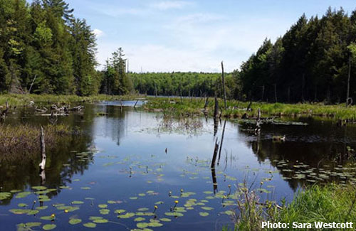 palmer pond
