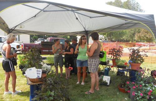 farmers market tent