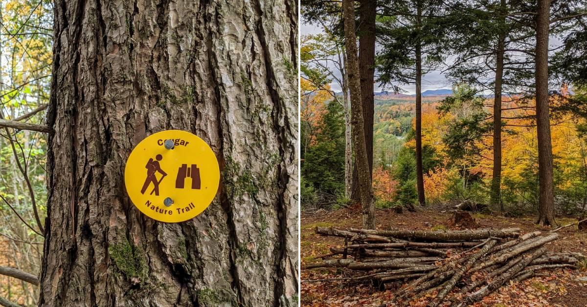 split image with trail marker on tree on the left and view from summit on the right