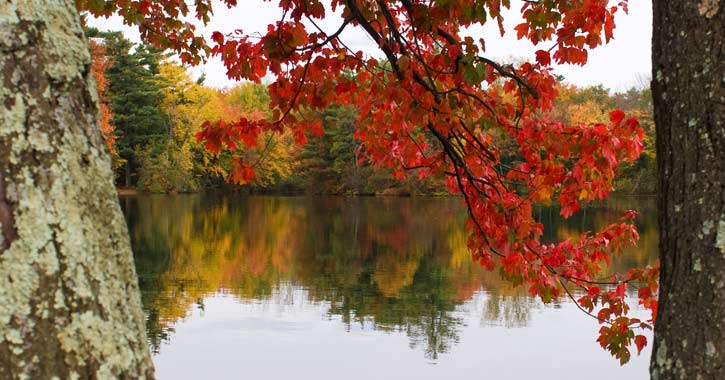 red fall foliage on a branch in the foreground, a lake with more foliage behind it in the background