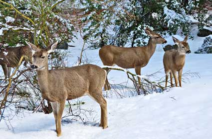 Hunting deer in the Adirondacks might be a little confusing...
