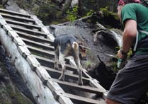 dog climbing ladder