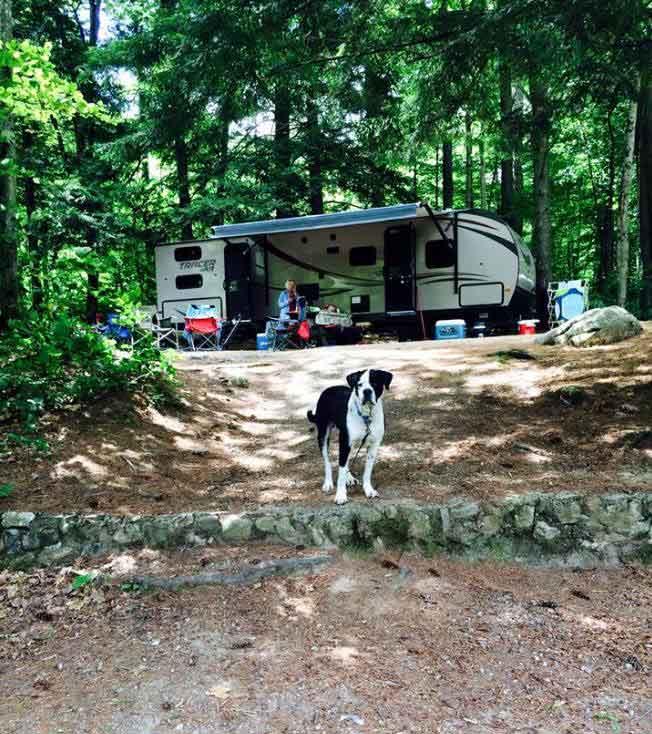 adirondack dog of the week camping