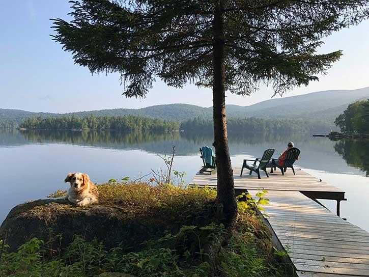 collie at blue mountain lake
