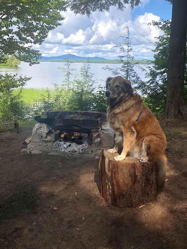 golden retriever at raquette lake