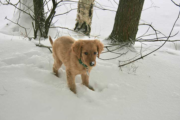 puppy in the snow at blue mountain lake