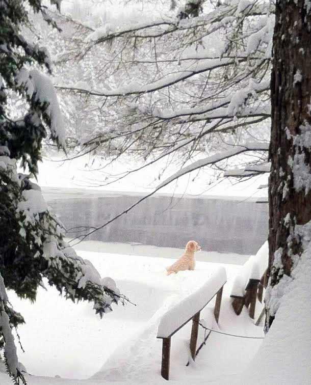 White dog in Adirondack snowscape