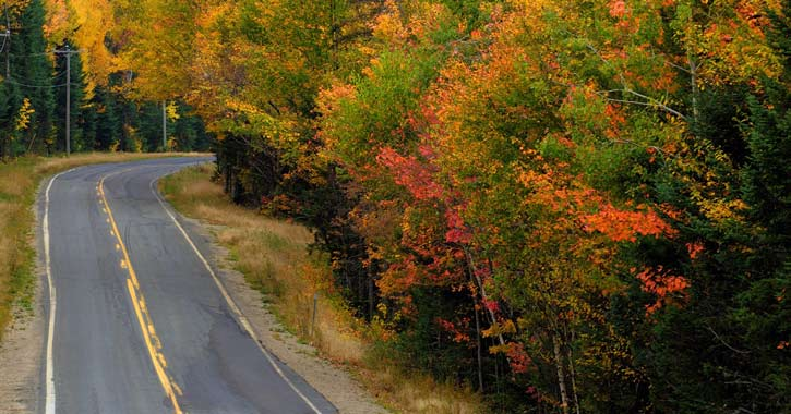 a curving country road with fall foliage