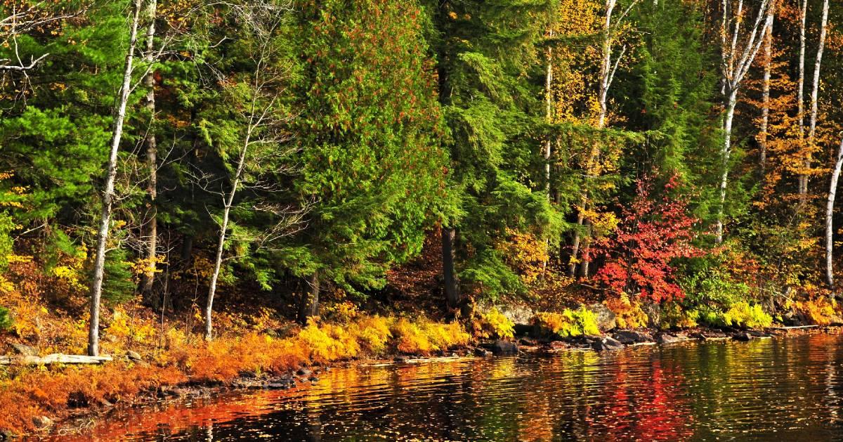 fall foliage by water