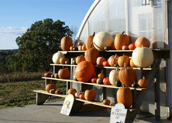 wooden stand with pumpkins on it
