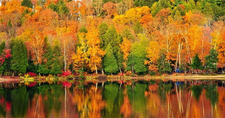 vivid orange and yellow foliage by a lake