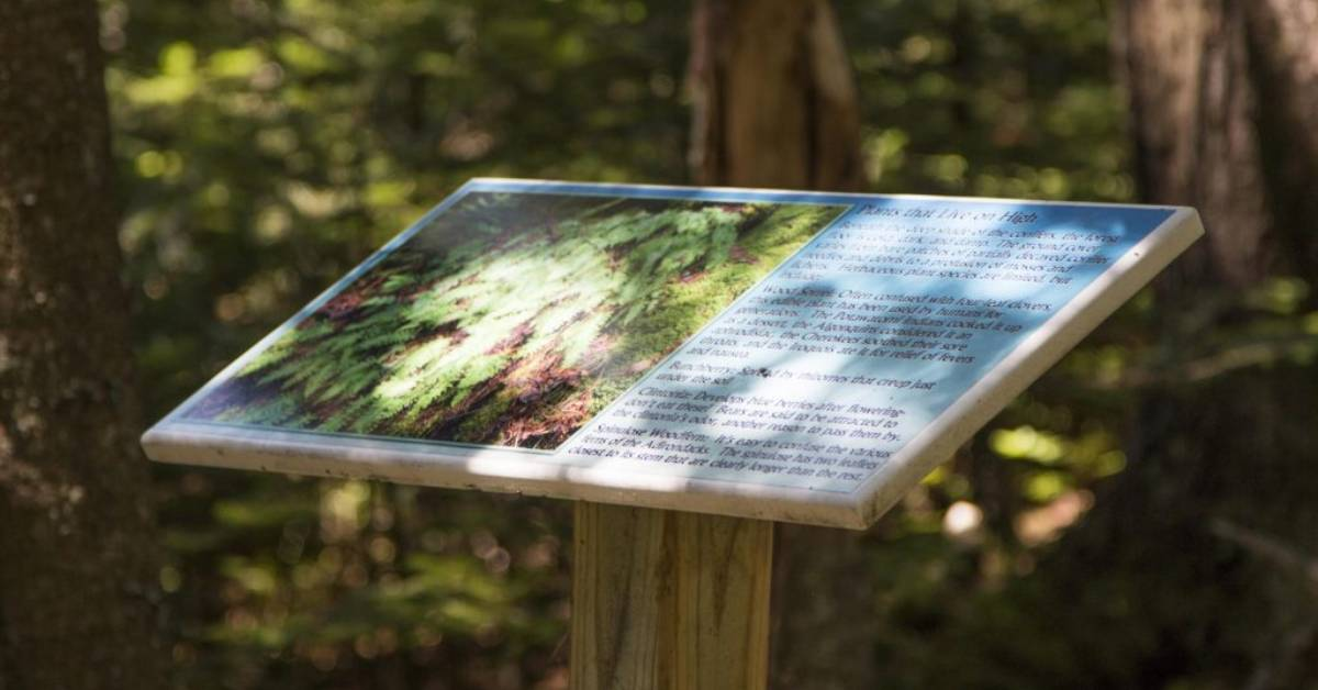 an interpretive sign in the woods