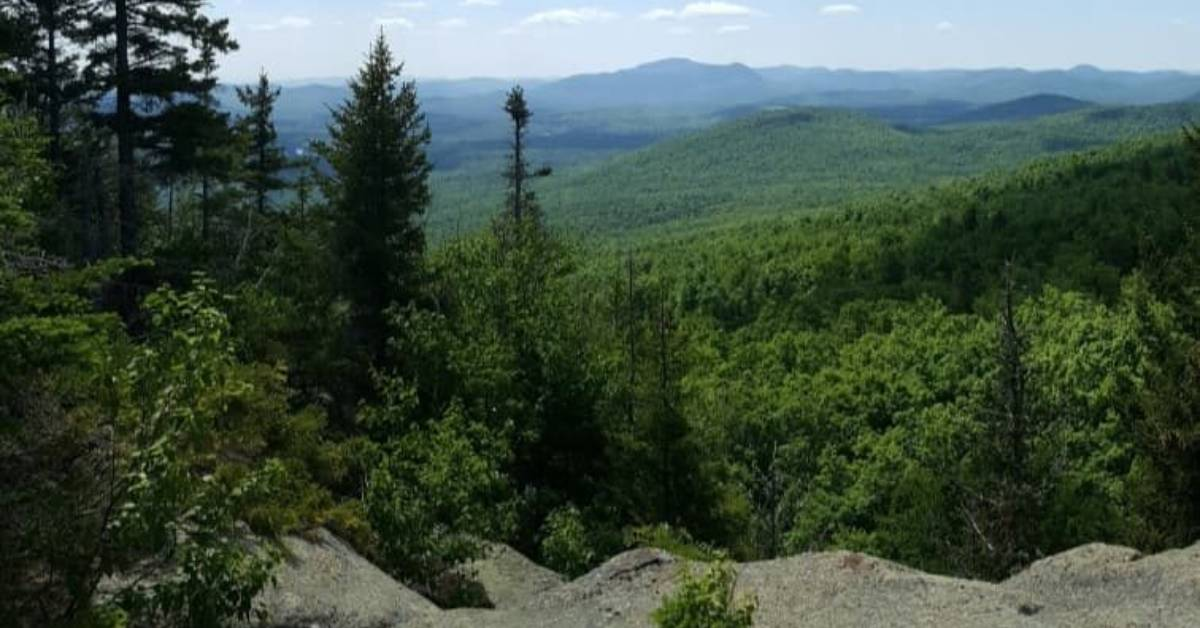 mountain view of forests