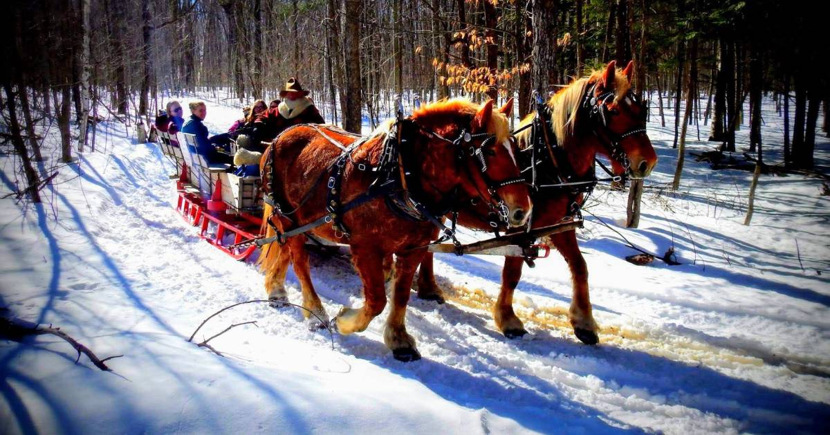 horses pulling a sleigh