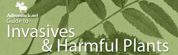 Invasives & Harmful Plants