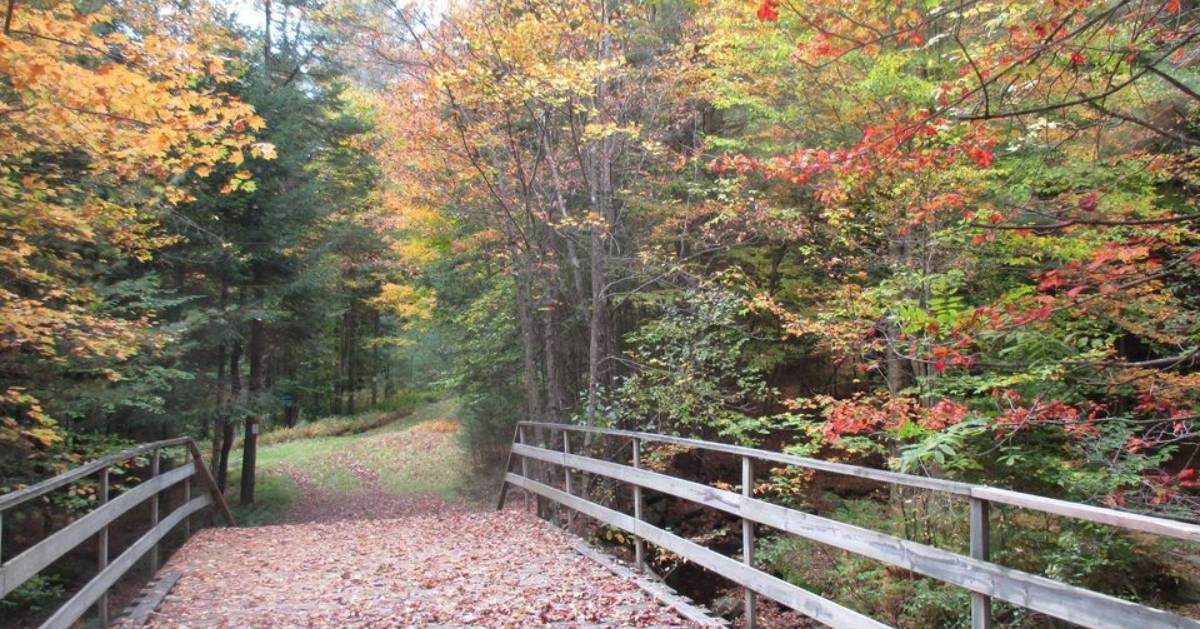 trail in the woods and bridge in the fall