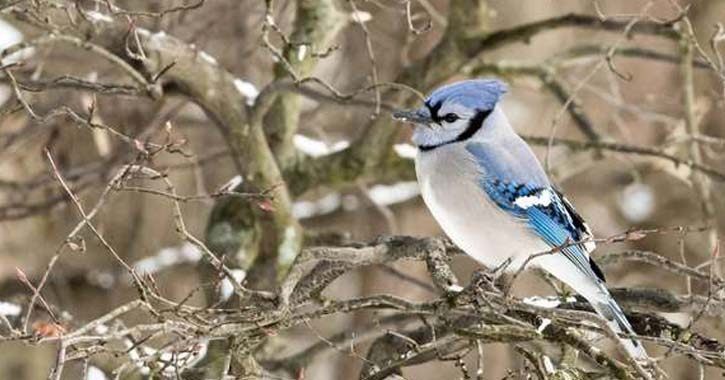 little blue bird in tree