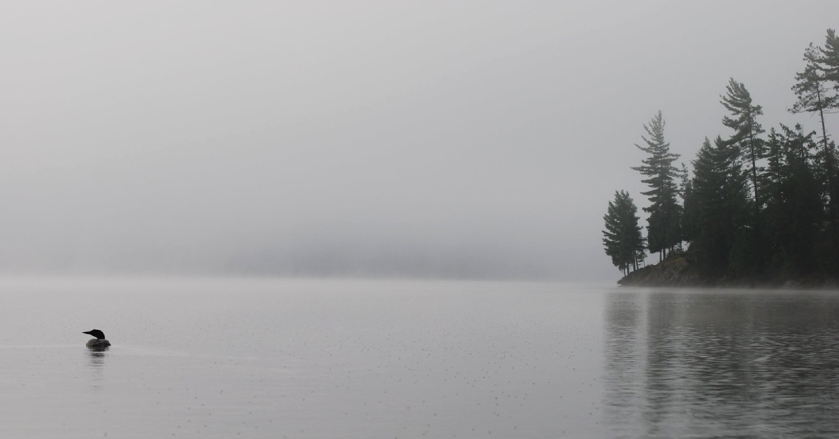 loon on a misty adirondack lake