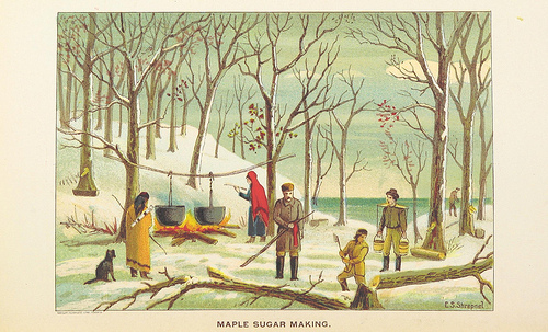 historical drawing of maple sugar making