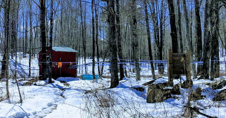 a maple sugaring operation outdoors