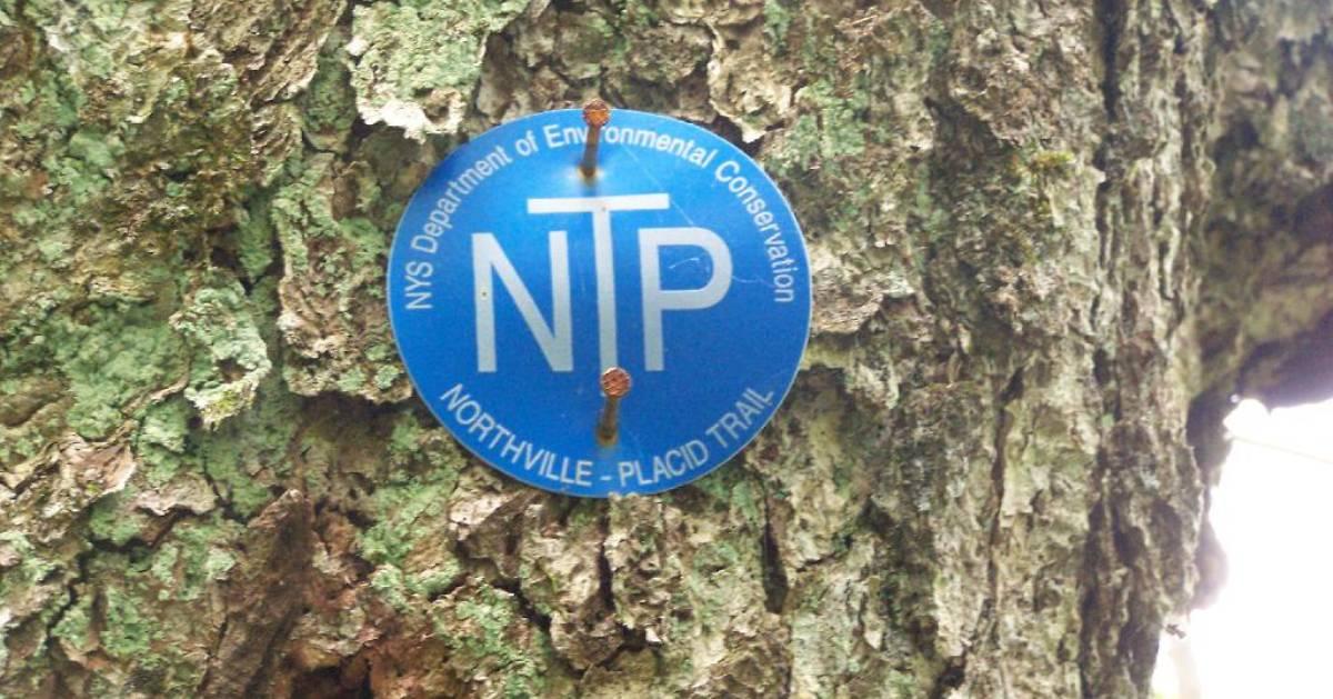 Northville-Placid Trail marker on tree