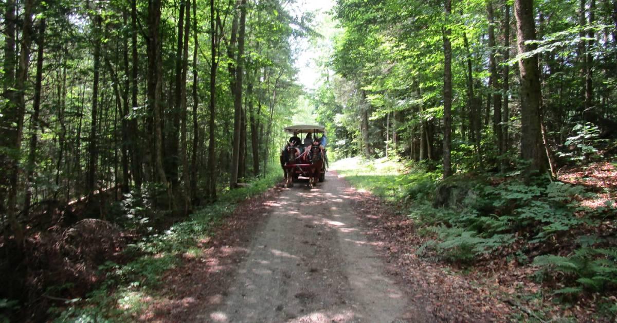 a horse drawn wagon ride down a trail