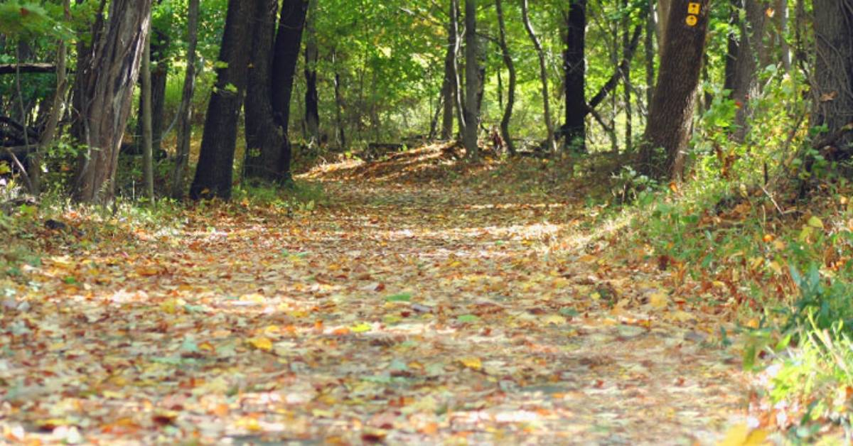 leaves on a wide trail