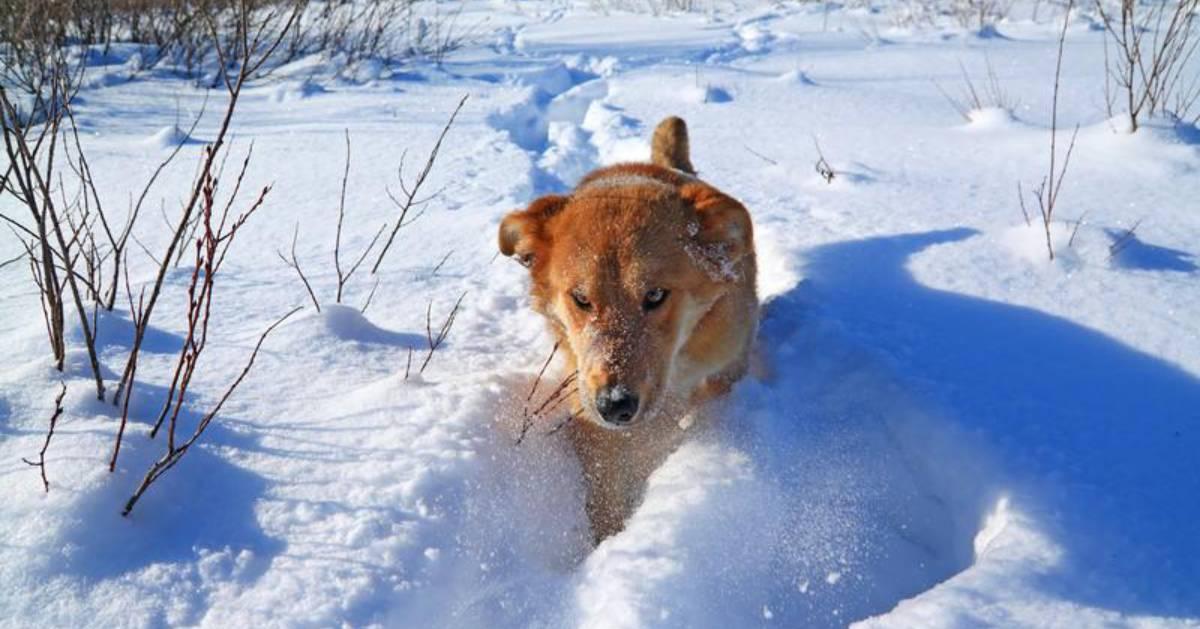 dog walking through snow
