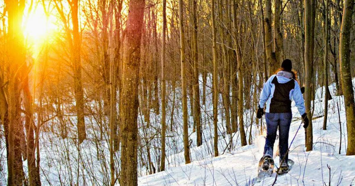 a person snowshoeing in the woods, bright sun