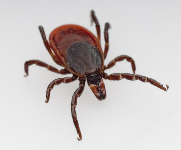 Protect Yourself From Ticks While Outdoors In Lake George