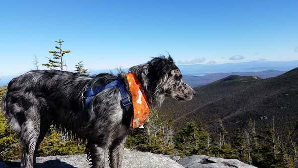 dog on giant mountain