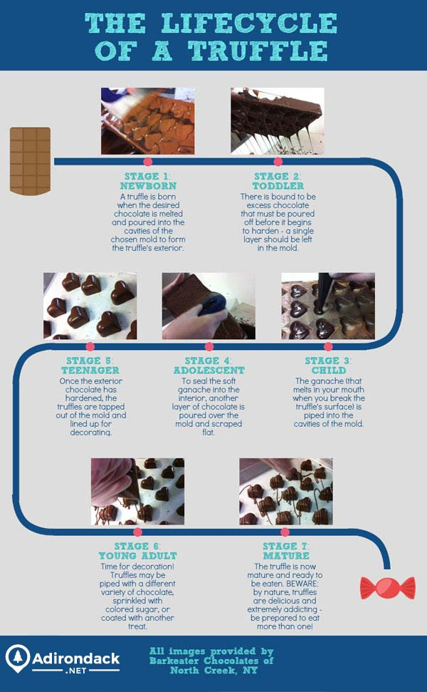 page about truffle creation - Stage 1 - Newborn, A truffle is born when the desired chocolate is melted and poured into the cavities of the chosen  mold to form the truffle's exterior; Stage 2 - Toddler, There is bound to be excess chocolate that must be poured off before it begins to harden - a single layer should be left in the mold; Stage 3 - Child, The ganache (that melts in your mouth when you break the truffle's surface) is piped into the cavities of the mold; Strage 4 - Adolescent, To seal the soft ganache into the interior, another layer of chocolate is poured over the mold and scraped flat; Stage 5 - Teenager, Once the exterior of the chocolate has hardened, the truffles are tapped out of the mold and lined up for decorating; Stage 6 - Young Adult, Time for decoration! Truffles may be piped with a different variety of choolate, sprinkled with colored sugar, or coated with another treat; Stage 7 - Mature, The truffle is now mature and ready to be eaten. Beware: by nature, truffles are delicious and extremely addicting - be prepared to eat more than one!