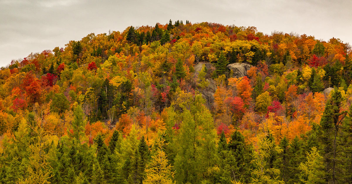 colorful trees on a mountain
