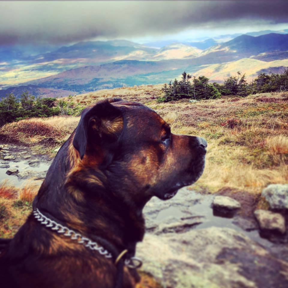 whistler the dog at summit of algonquin mountain