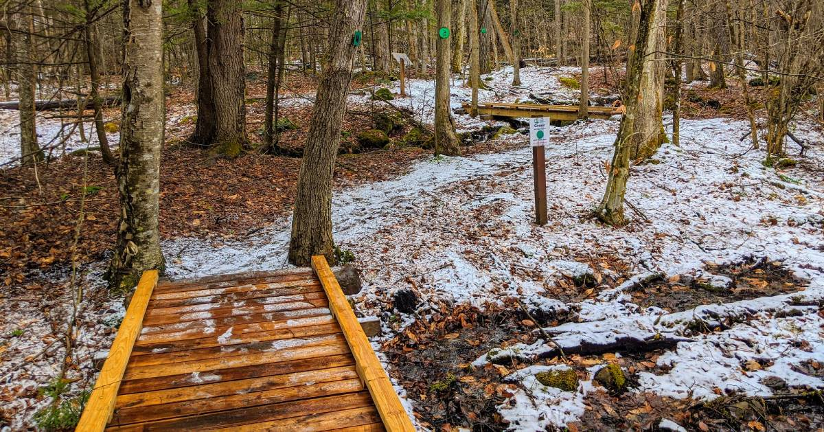 a bridge in the woods in the winter